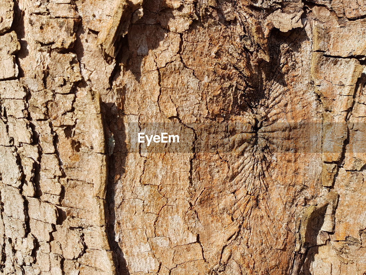 textured, backgrounds, full frame, tree, tree trunk, trunk, wood - material, close-up, pattern, no people, rough, plant, cracked, plant bark, weathered, nature, natural pattern, brown, day, bark, outdoors, textured effect, abstract backgrounds