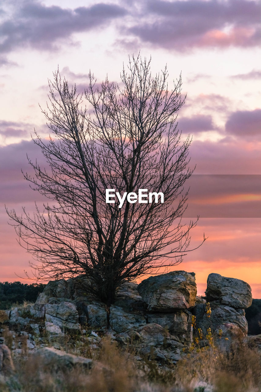bare tree, tranquility, beauty in nature, tranquil scene, sky, sunset, nature, lone, solitude, majestic, remote, branch, scenics, landscape, outdoors, tree, no people, water, day