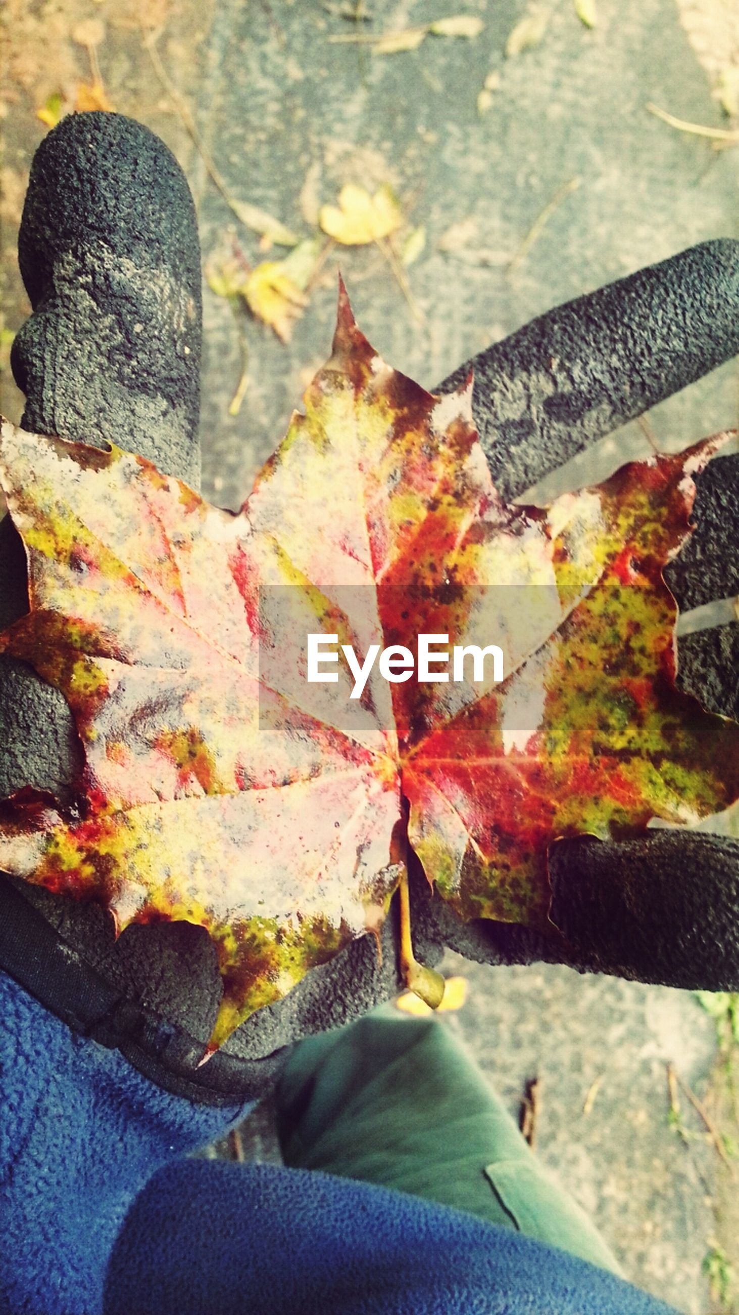 leaf, autumn, low section, season, change, water, close-up, leaves, person, day, part of, outdoors, lifestyles, nature, high angle view, unrecognizable person, focus on foreground