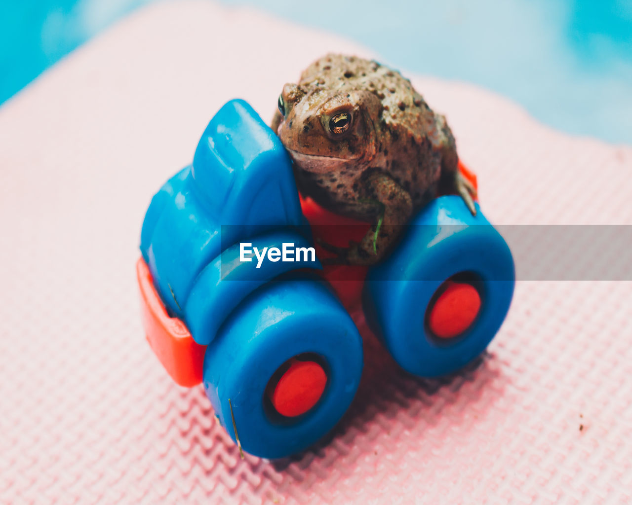 Close-Up Of Frog On Multi Colored Toy