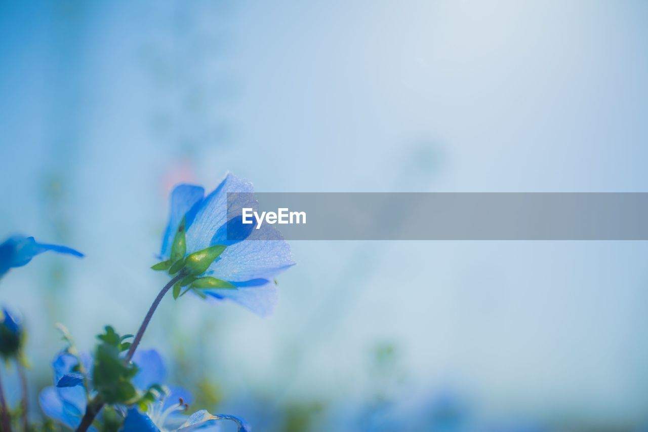 flowering plant, flower, plant, vulnerability, freshness, fragility, beauty in nature, growth, petal, close-up, blue, inflorescence, flower head, nature, no people, focus on foreground, selective focus, plant stem, day, purple, outdoors