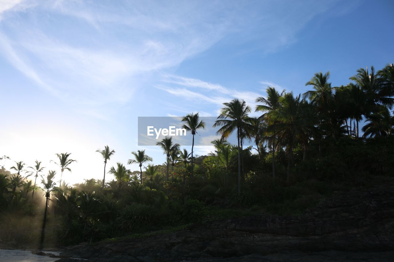 palm tree, tree, nature, sky, beauty in nature, growth, tranquility, tranquil scene, outdoors, day, scenics, no people, beach, sea, horizon over water