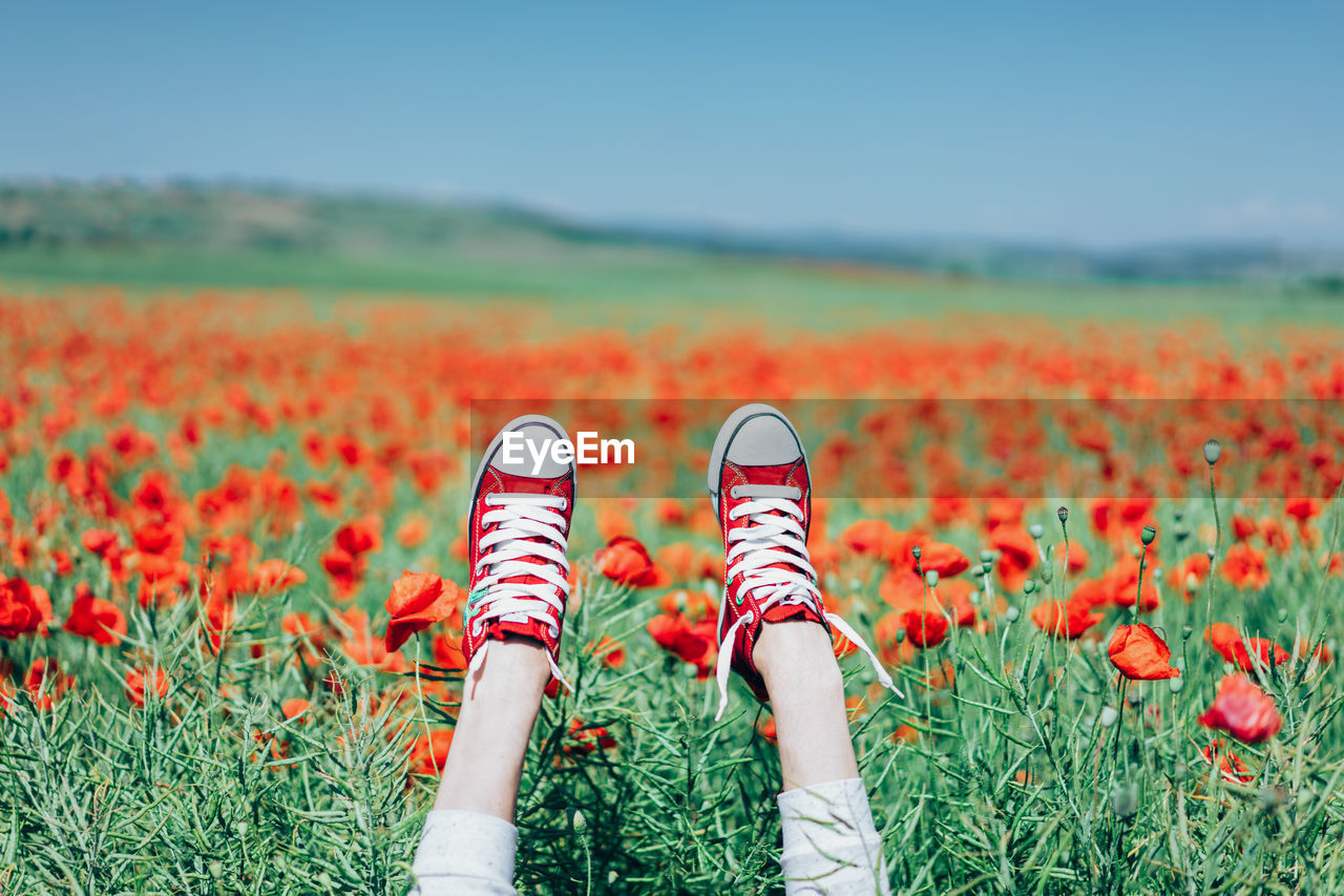 Canvas Shoes On Hands In Poppy Field