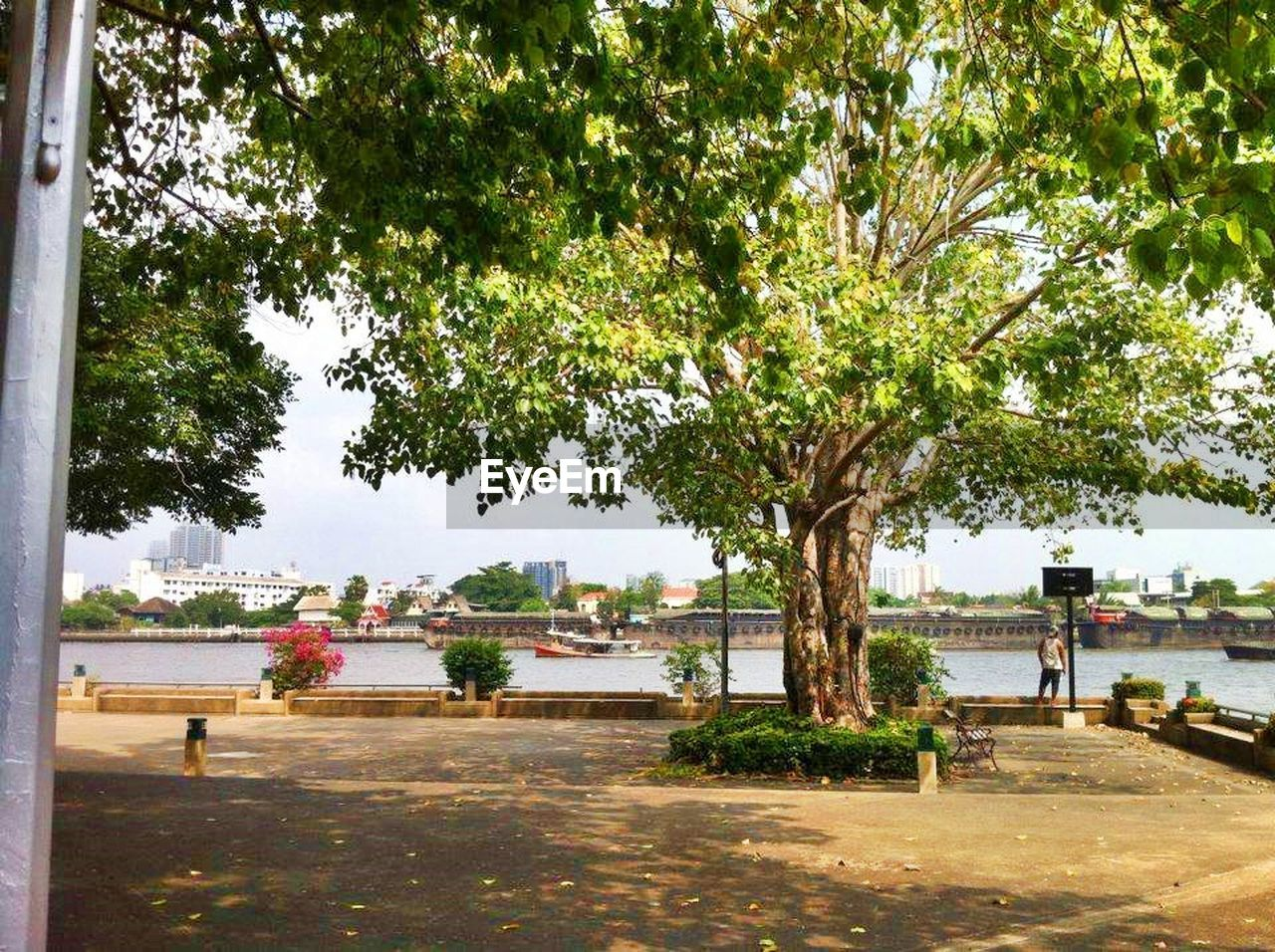 tree, incidental people, day, outdoors, water, growth, men, real people, city, nature, sky, people, adult