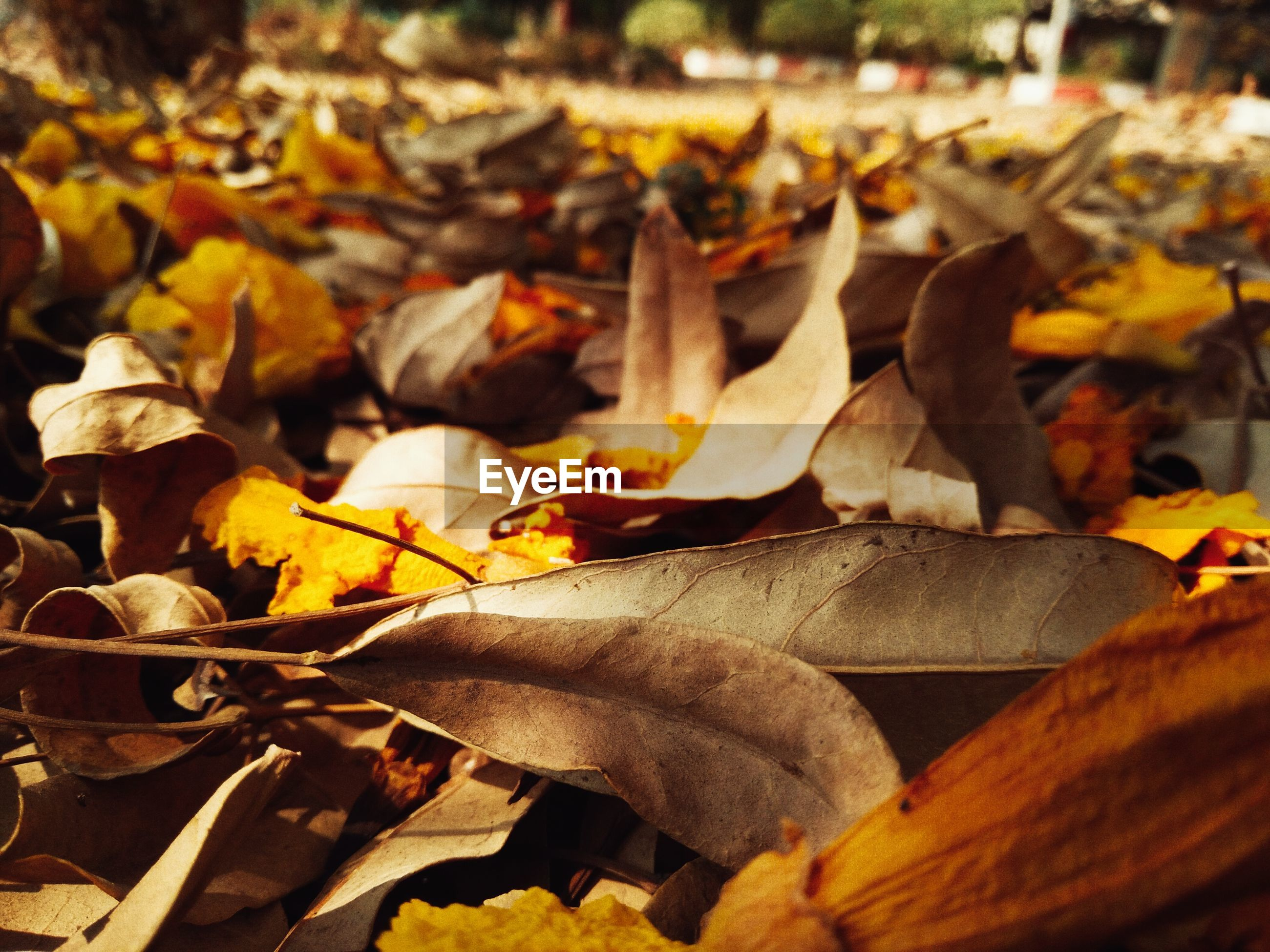 autumn, dry, change, focus on foreground, selective focus, leaf, leaves, season, yellow, abundance, close-up, large group of objects, fallen, outdoors, day, nature, sunlight, no people, field, wood - material