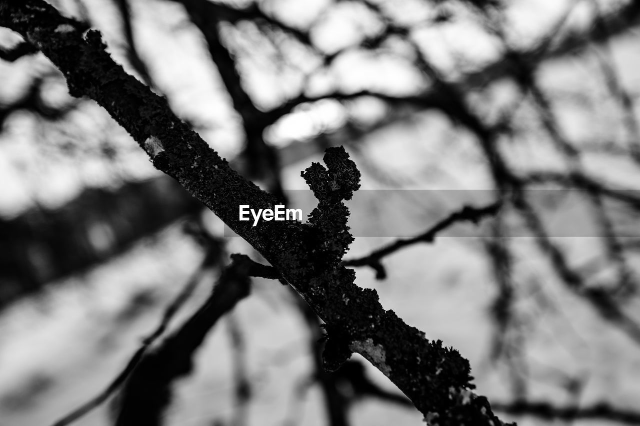 focus on foreground, day, close-up, no people, branch, outdoors, nature, tree, growth, beauty in nature