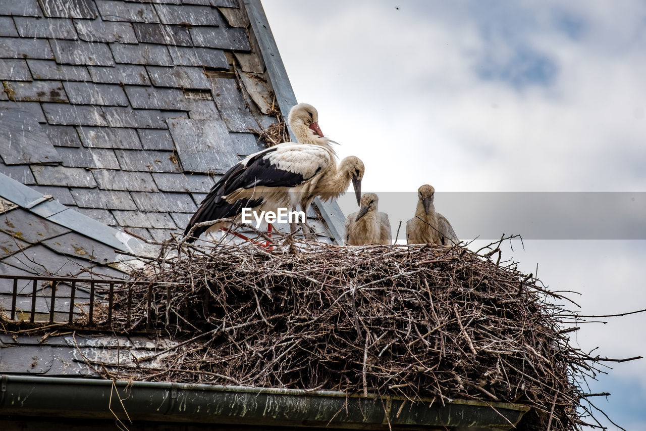 LOW ANGLE VIEW OF BIRDS IN NEST