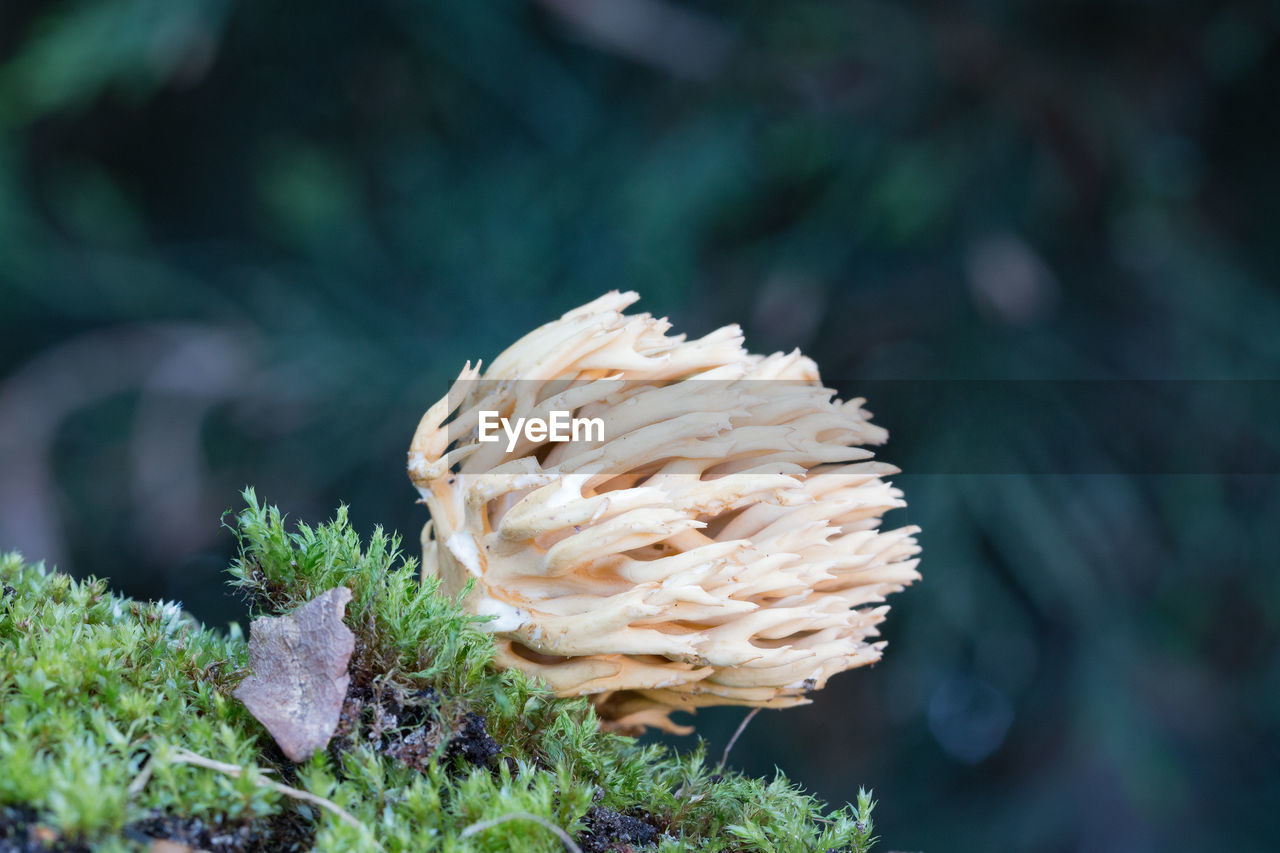 Close-Up Of Fungus Growing On Moss Covered Rock