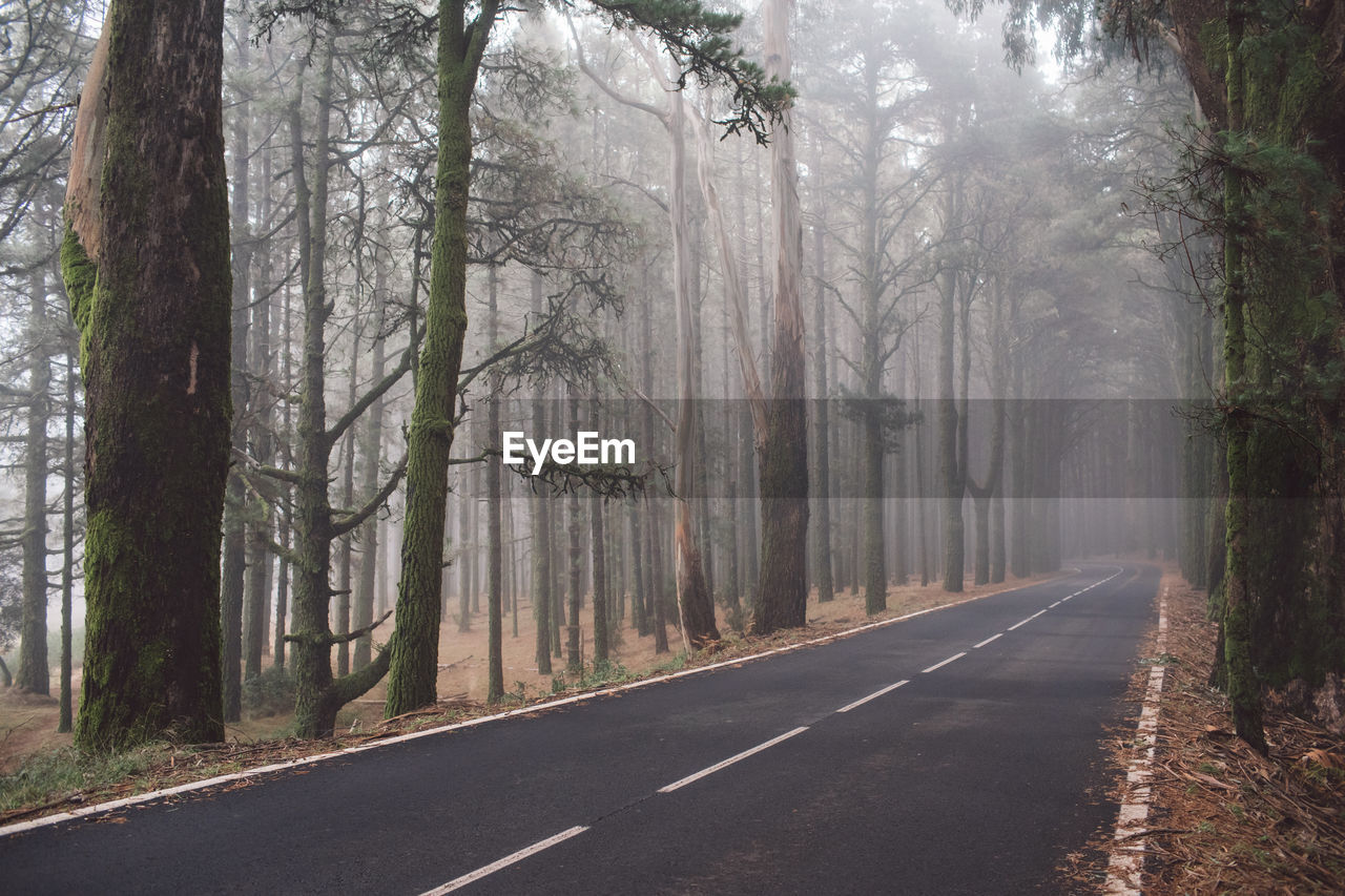 tree, plant, road, tree trunk, direction, trunk, the way forward, transportation, fog, nature, forest, land, sign, symbol, marking, no people, tranquility, road marking, day, woodland, outdoors, diminishing perspective, treelined, dividing line