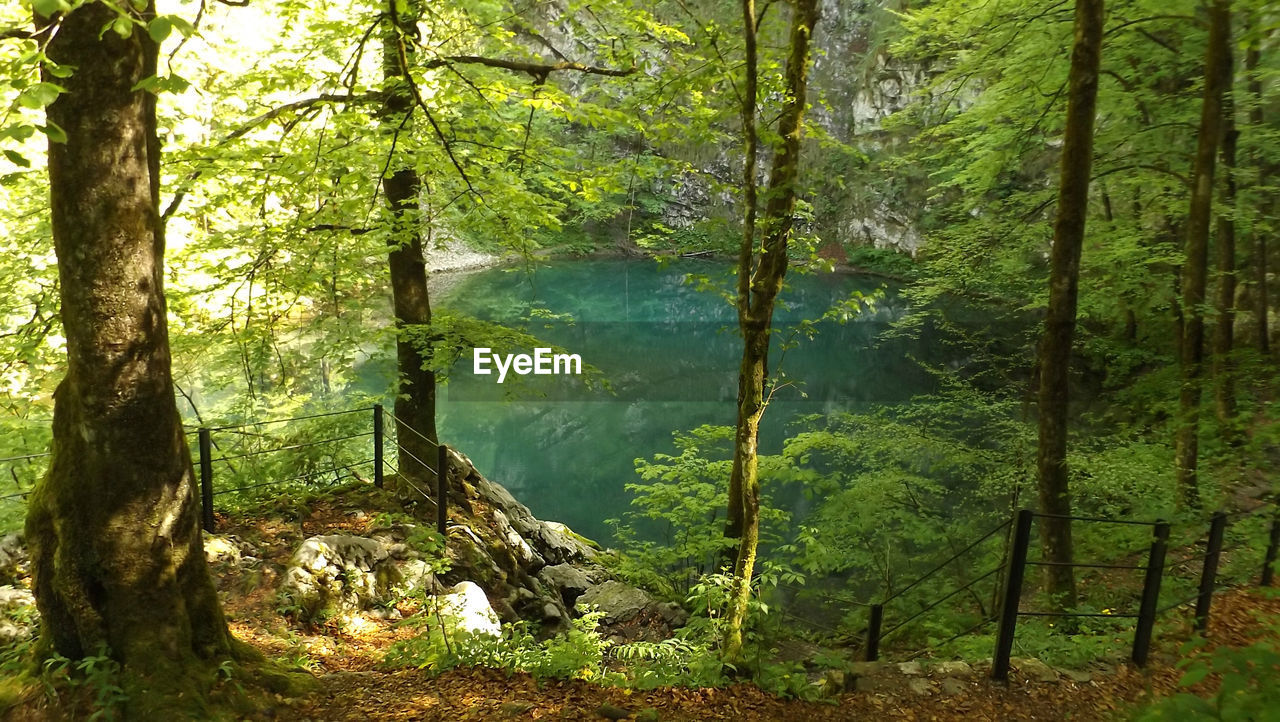 tree, forest, green color, nature, mountain, tranquil scene, scenics, no people, day, outdoors, beauty in nature, growth