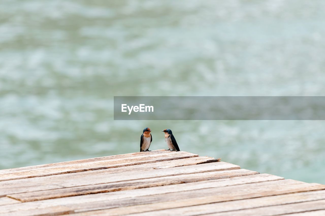 Birds Perching On Pier Against Lake