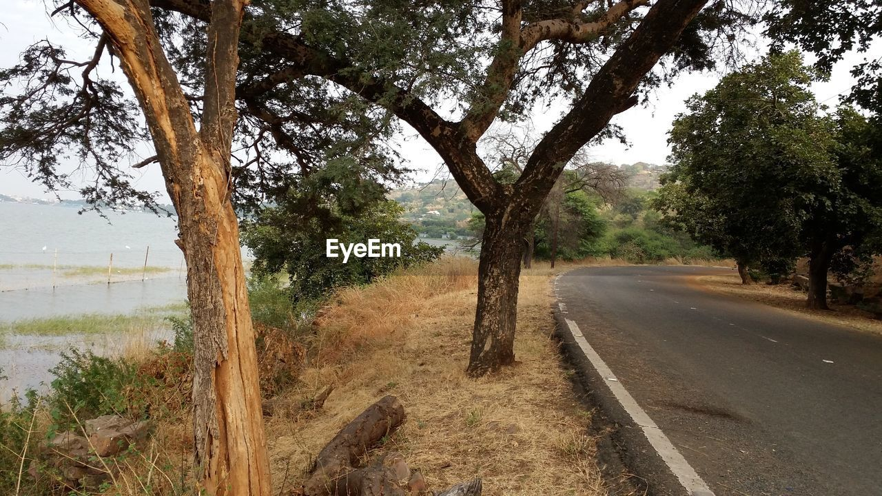 tree, road, nature, no people, day, growth, landscape, scenics, tranquil scene, outdoors, the way forward, tranquility, beauty in nature, tree trunk, branch, sky