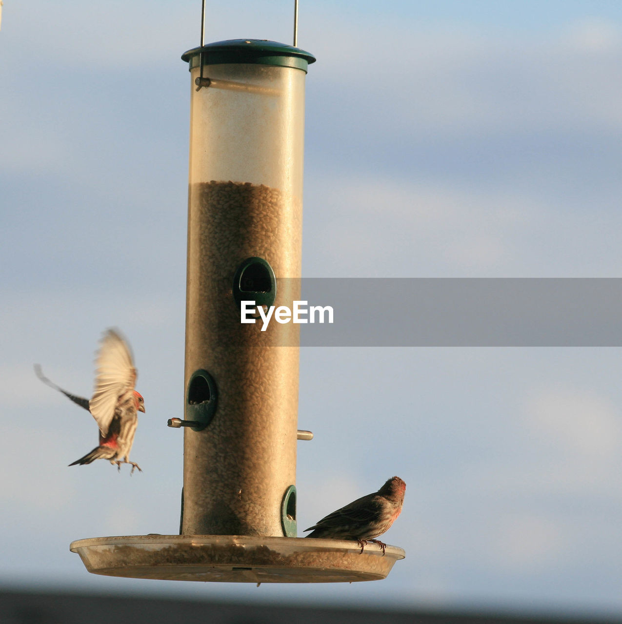 Low Angle View Of Sparrows On Bird Feeder Against Sky