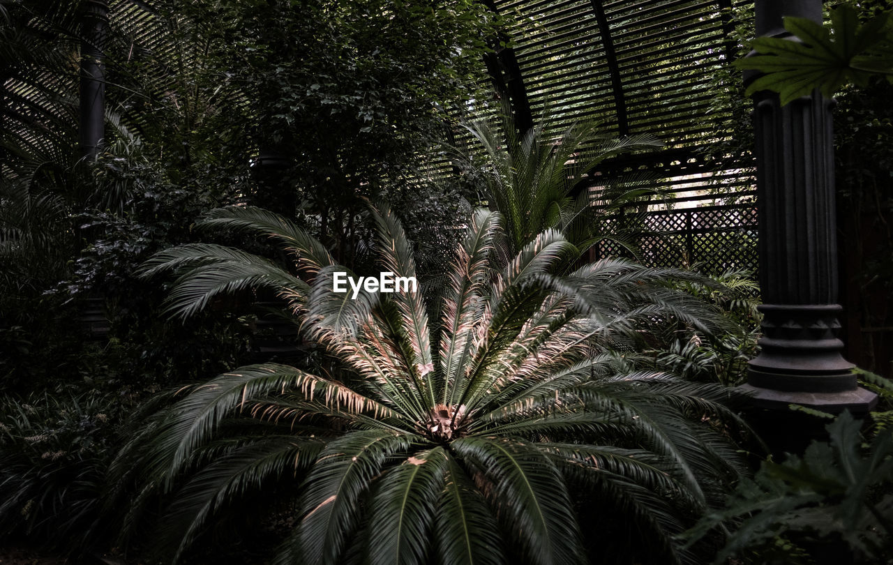 plant, growth, tree, tropical climate, palm tree, nature, leaf, no people, green color, beauty in nature, outdoors, plant part, front or back yard, architecture, day, built structure, garden, illuminated, palm leaf