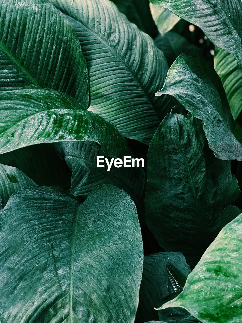 leaf, plant part, green color, growth, full frame, plant, no people, close-up, backgrounds, nature, beauty in nature, day, freshness, natural pattern, leaf vein, leaves, tranquility, outdoors, food and drink, botany