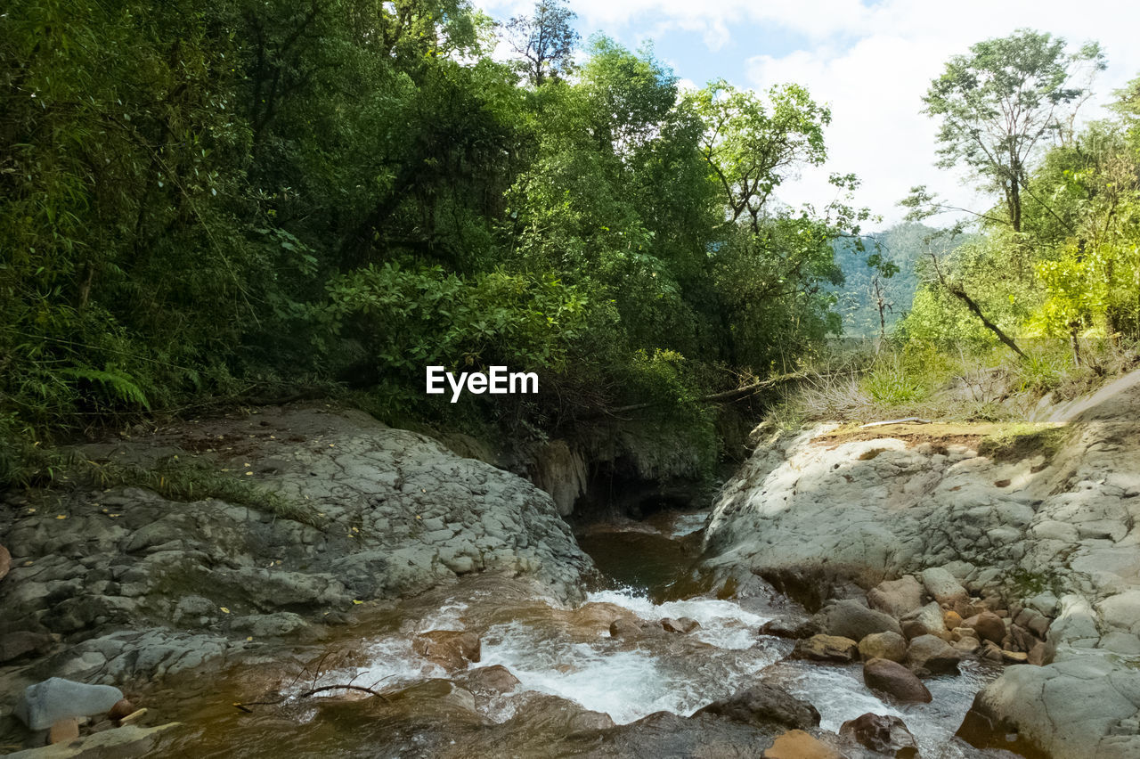tree, waterfall, nature, forest, beauty in nature, scenics, river, no people, tranquil scene, rock - object, water, tranquility, outdoors, day, growth, sky