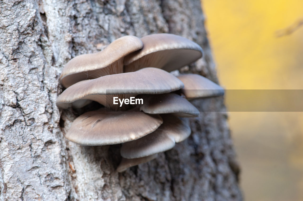 mushroom, fungus, trunk, tree trunk, tree, close-up, nature, focus on foreground, day, toadstool, plant, growth, food, vegetable, no people, textured, outdoors, edible mushroom, wood - material, selective focus