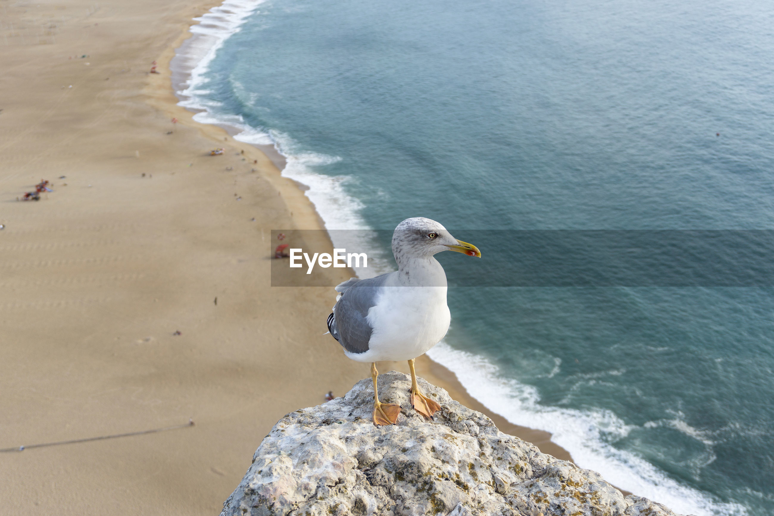 High angle view of seagull perching on shore