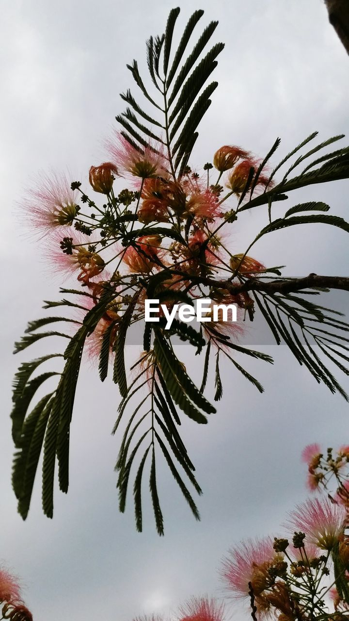 tree, growth, nature, sky, no people, low angle view, beauty in nature, outdoors, plant, flower, day, branch, palm tree, close-up, freshness, flower head