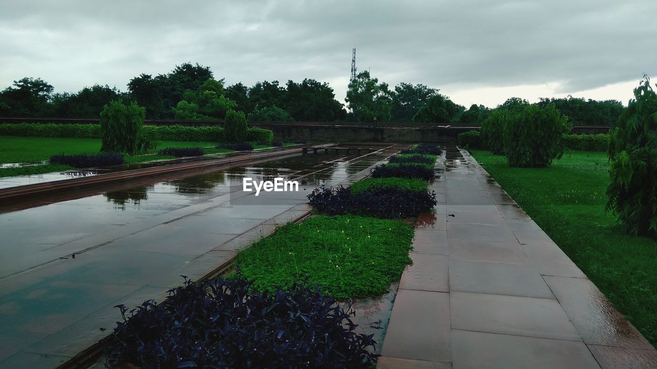 plant, water, sky, tree, nature, cloud - sky, growth, reflection, green color, footpath, day, no people, grass, tranquility, lake, agriculture, outdoors, scenics - nature, beauty in nature, garden path, rain, rainy season