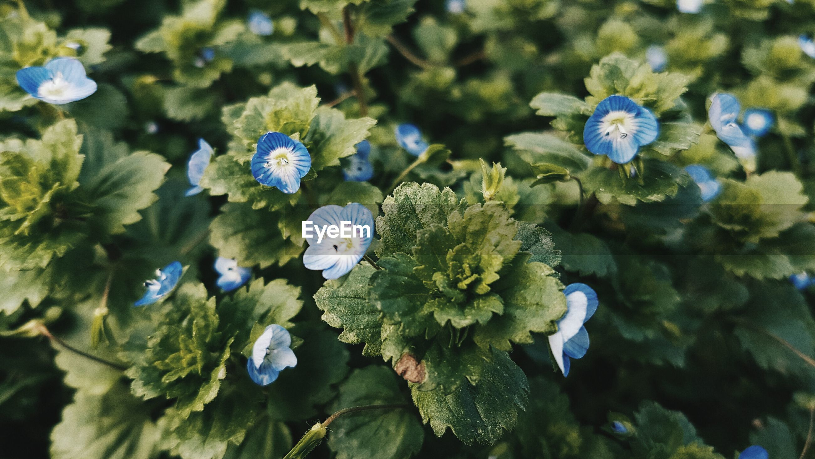 flower, nature, growth, plant, beauty in nature, green color, no people, fragility, close-up, outdoors, day, freshness, flower head