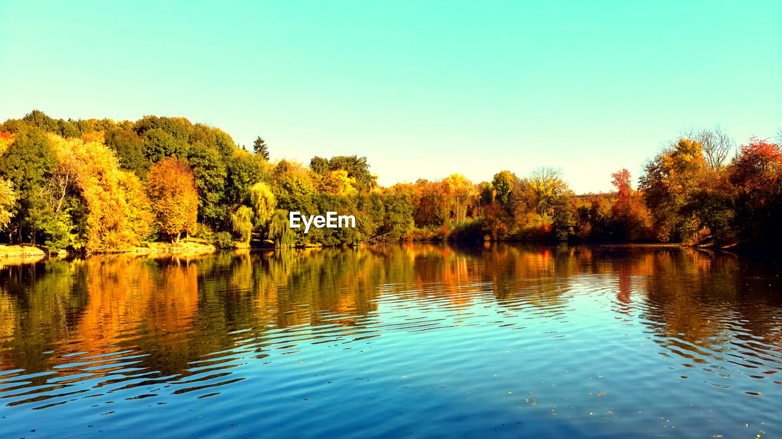 tree, clear sky, water, reflection, lake, tranquility, tranquil scene, waterfront, autumn, beauty in nature, scenics, change, nature, blue, copy space, idyllic, growth, day, outdoors, calm