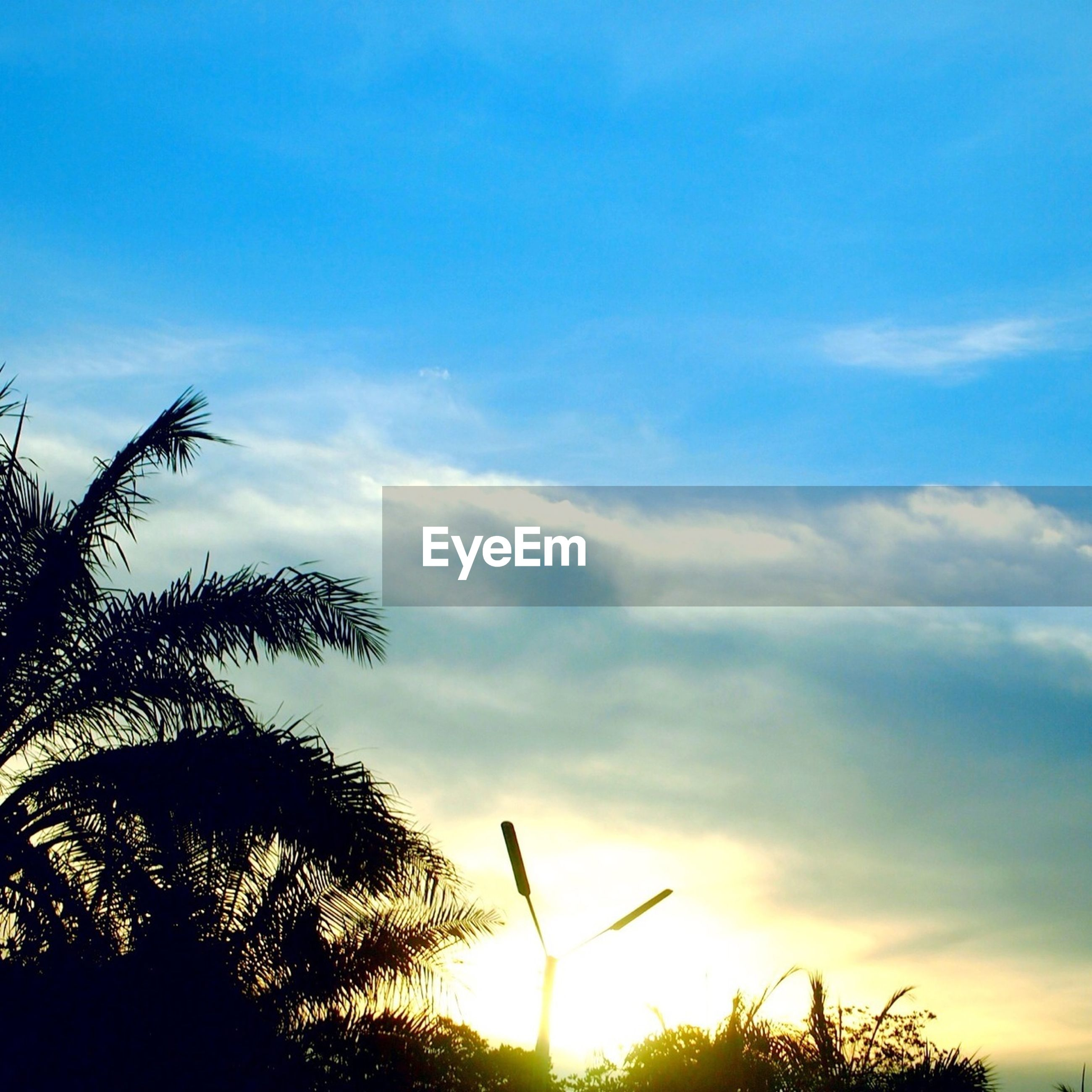 low angle view, silhouette, sky, tree, sunset, beauty in nature, nature, tranquility, cloud - sky, scenics, cloud, blue, tranquil scene, growth, sun, branch, outdoors, sunlight, no people, bird