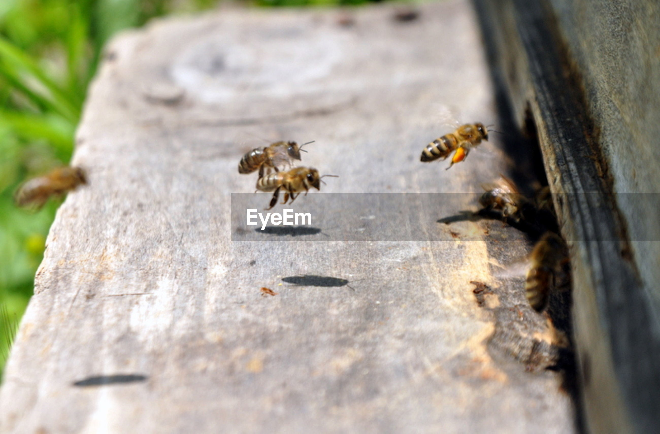 animals in the wild, animal themes, wildlife, insect, one animal, selective focus, wood - material, close-up, nature, textured, day, outdoors, focus on foreground, plank, no people, tree trunk, ant, zoology, wooden, high angle view