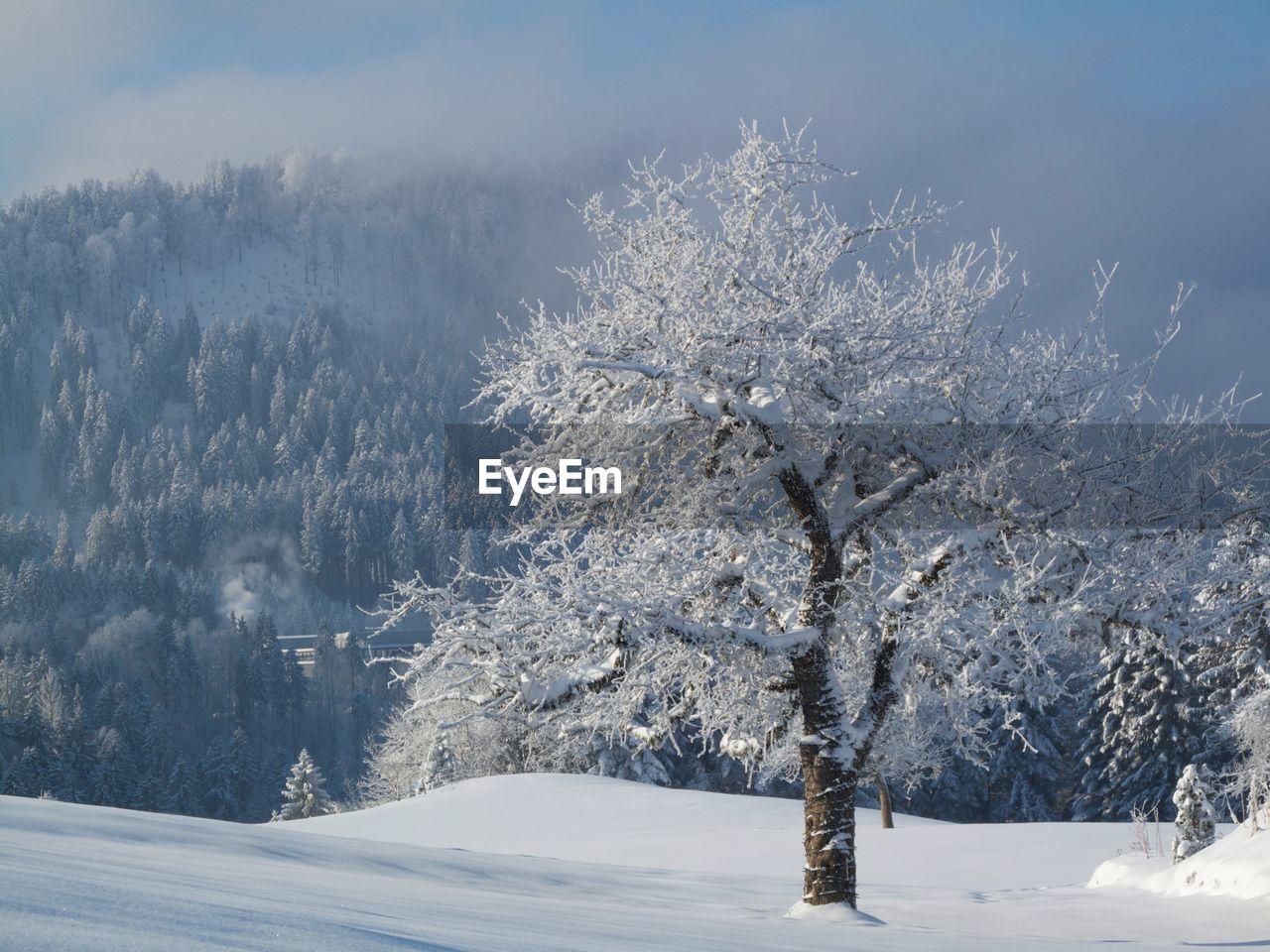 Frozen Trees On Landscape Against Sky