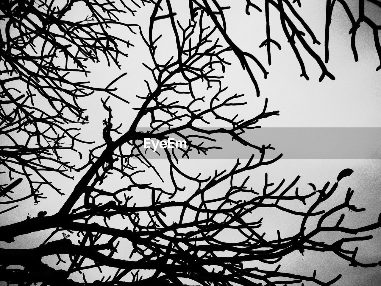 tree, branch, sky, plant, bare tree, low angle view, no people, silhouette, beauty in nature, nature, tranquility, clear sky, day, outdoors, growth, dusk, twig, moon, scenics - nature, complexity