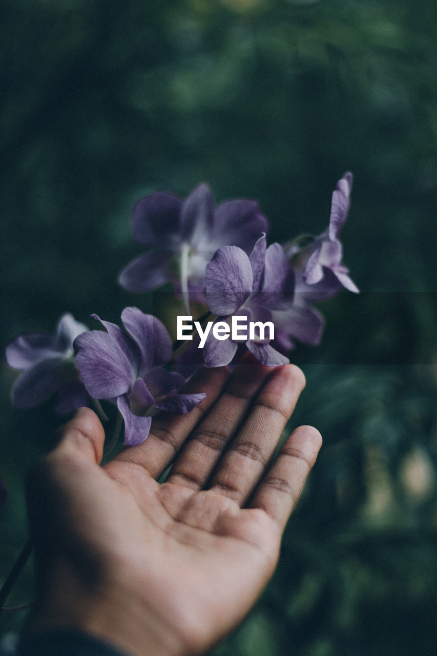human hand, hand, human body part, flower, plant, flowering plant, one person, real people, body part, nature, vulnerability, fragility, growth, purple, beauty in nature, finger, human finger, close-up, selective focus, outdoors, flower head, human limb