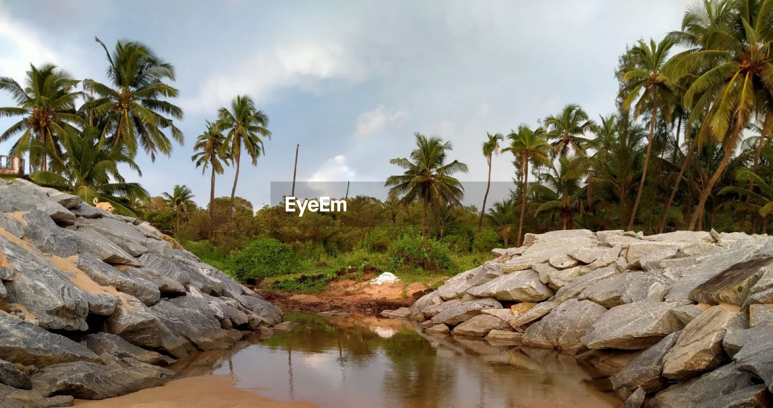 Panoramic view of palm trees and rocks against sky