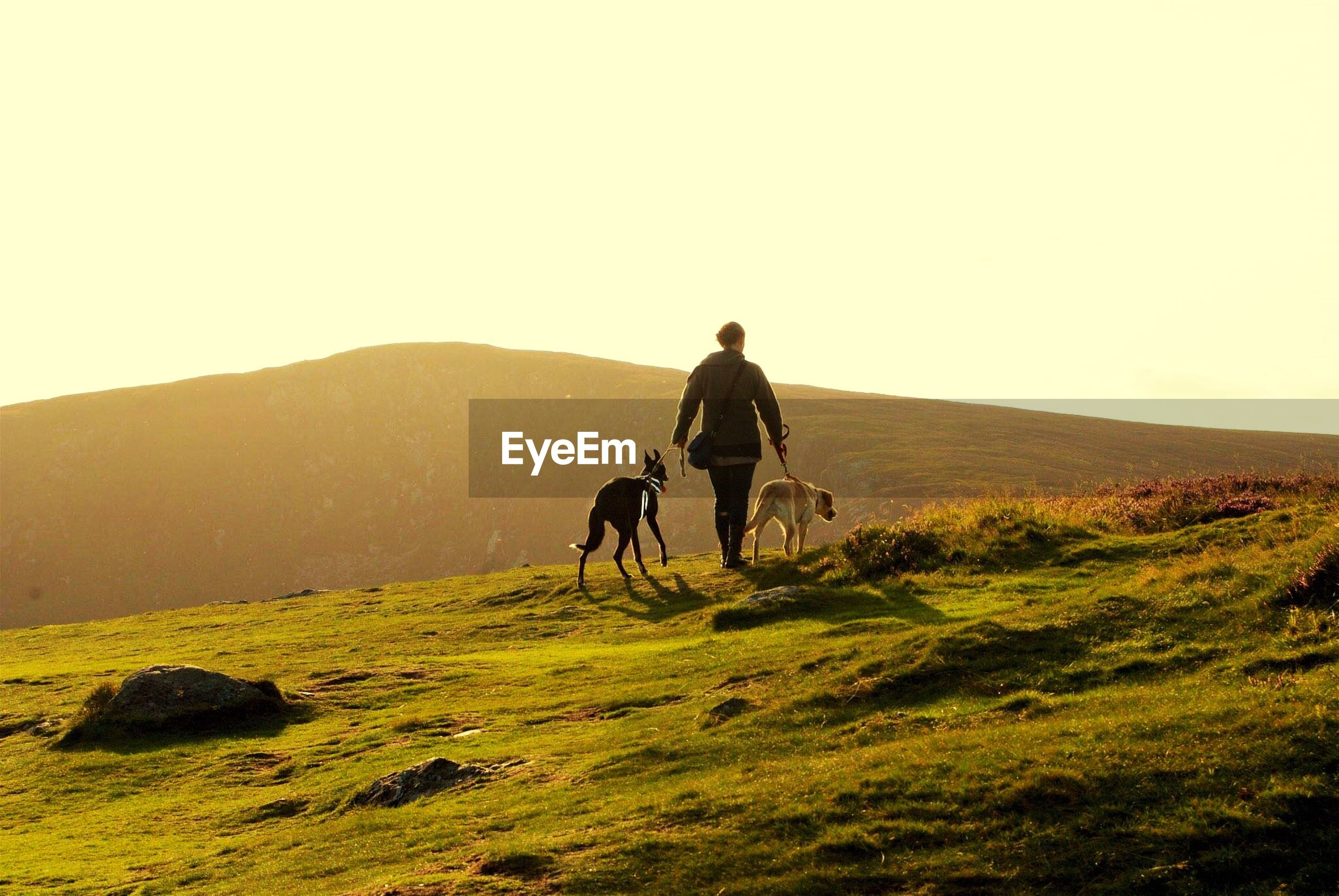 Rear view of woman walking with dog on hill against clear sky