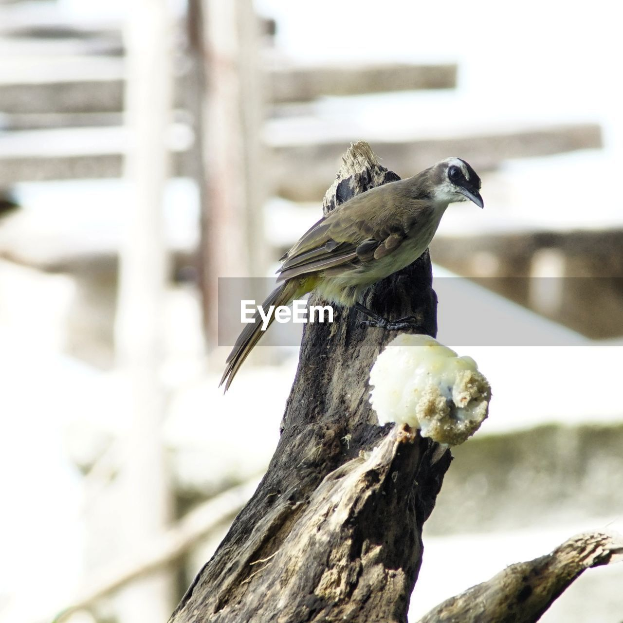 animal wildlife, bird, animal, animal themes, vertebrate, animals in the wild, perching, one animal, focus on foreground, wood - material, no people, day, tree, nature, close-up, outdoors, branch, plant, full length, side view