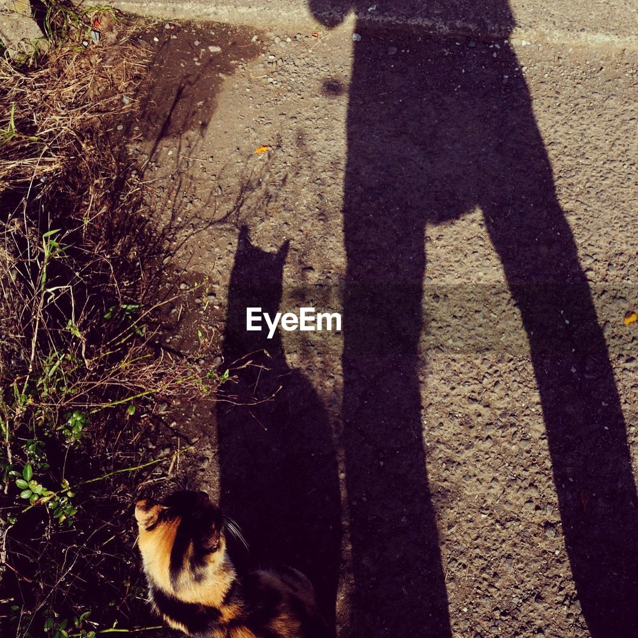Cat Standing By Shadow On Road