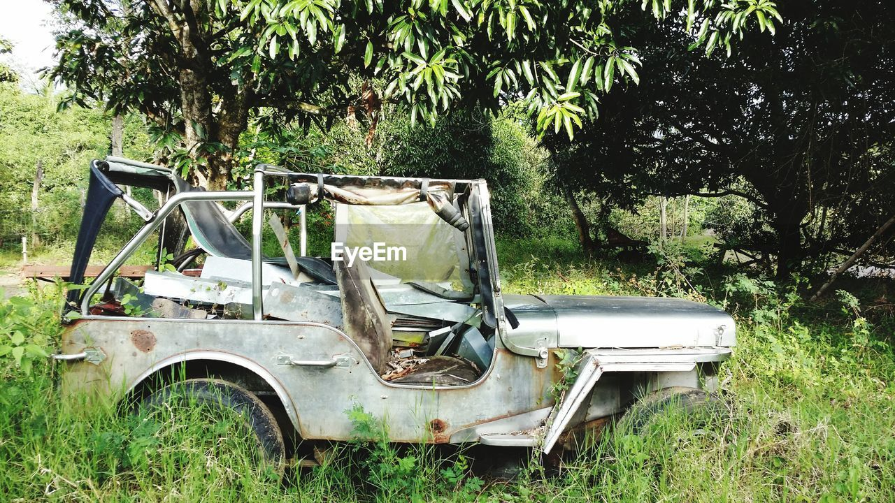 plant, tree, land, abandoned, field, mode of transportation, damaged, day, grass, land vehicle, transportation, nature, obsolete, no people, green color, motor vehicle, car, growth, run-down, outdoors, deterioration