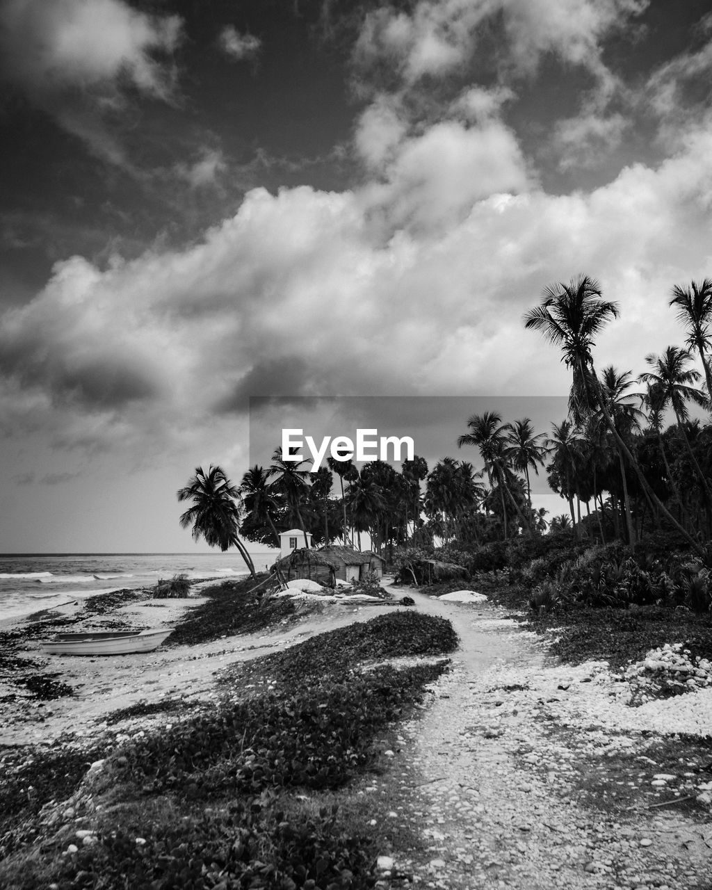 sky, cloud - sky, tree, plant, beauty in nature, land, tropical climate, palm tree, scenics - nature, nature, sea, water, tranquil scene, tranquility, beach, day, no people, outdoors, horizon, coconut palm tree