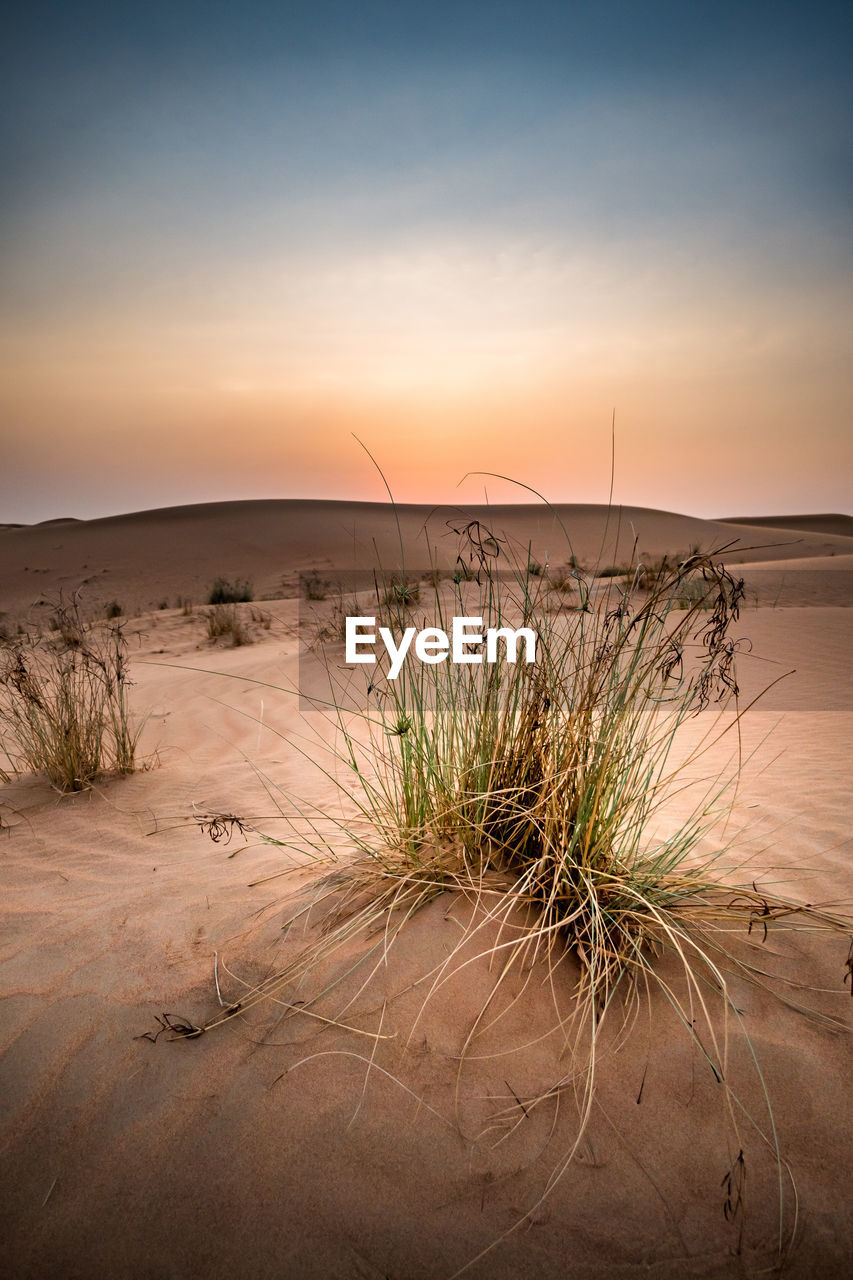nature, tranquil scene, sand, sunset, tranquility, scenics, beauty in nature, sand dune, beach, sky, outdoors, desert, travel destinations, no people, landscape, water, arid climate, sea, vacations, marram grass, day