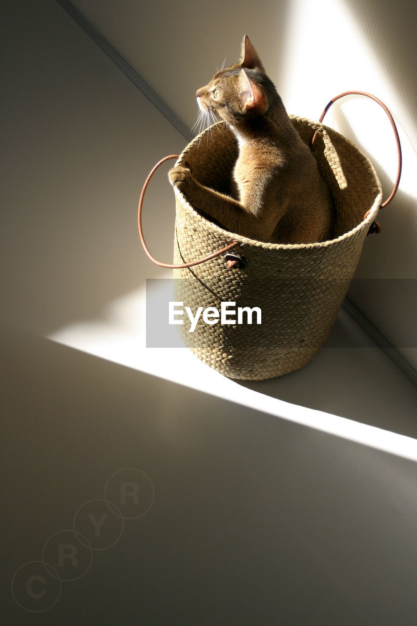 High Angle View Of Cat Hiding In Basket At Home