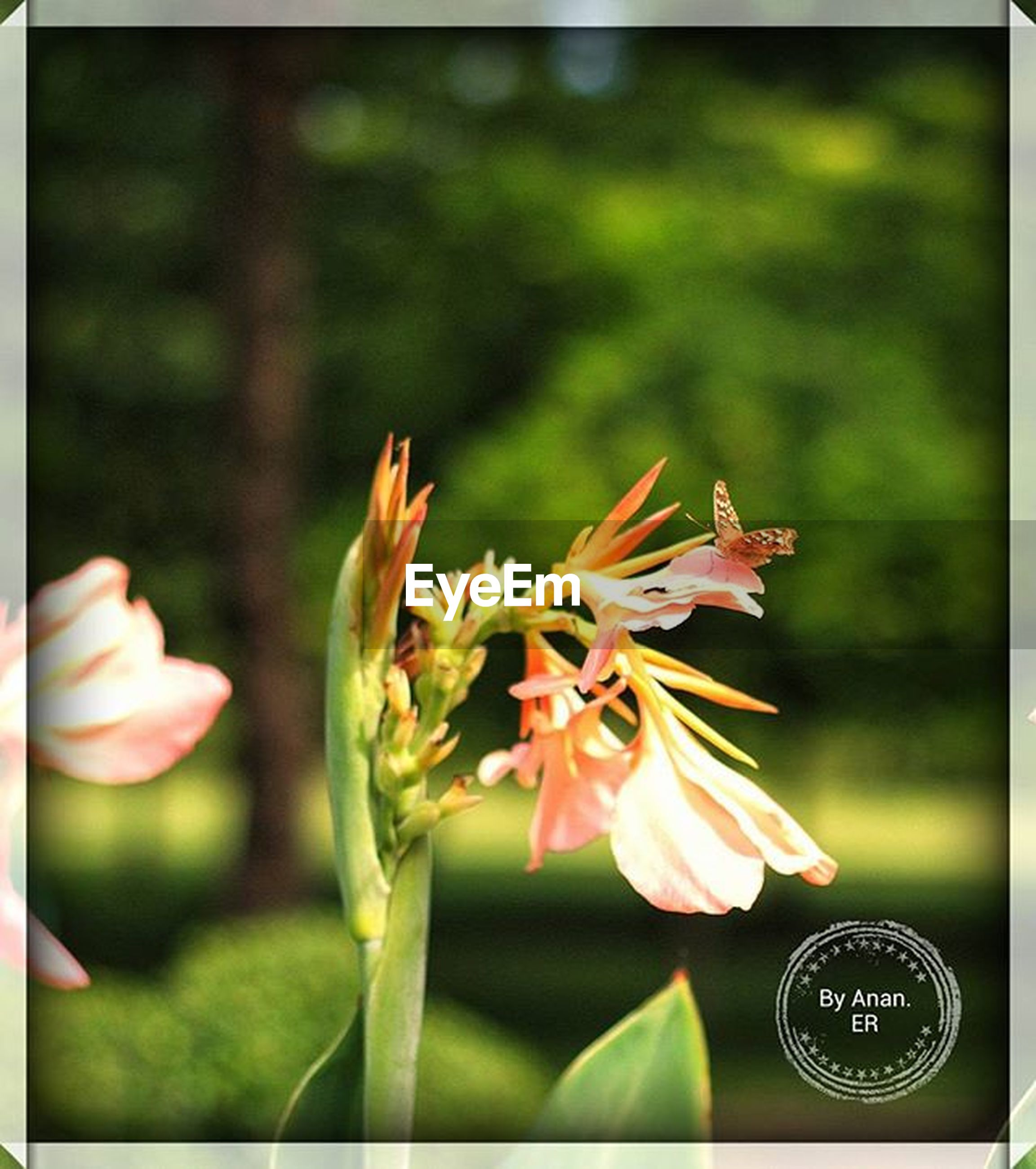flower, focus on foreground, freshness, petal, close-up, fragility, flower head, growth, transfer print, beauty in nature, plant, nature, stem, bud, auto post production filter, blooming, selective focus, single flower, leaf, day