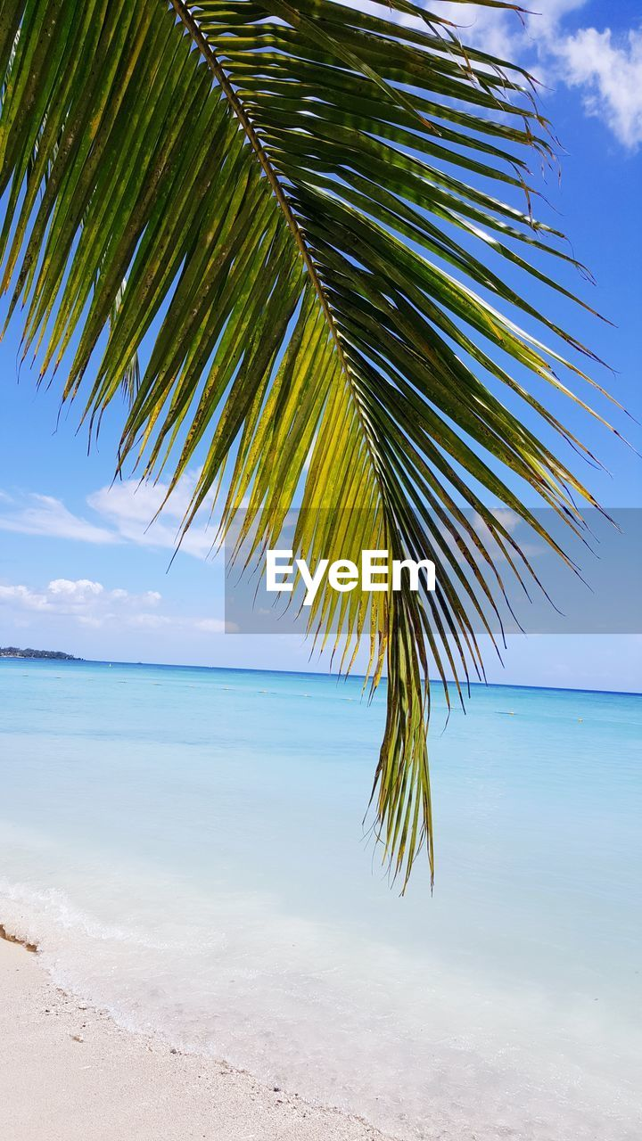 sea, water, beach, beauty in nature, sky, horizon over water, tranquility, horizon, scenics - nature, tranquil scene, land, tree, palm tree, tropical climate, nature, idyllic, no people, plant, day, outdoors, palm leaf, coconut palm tree