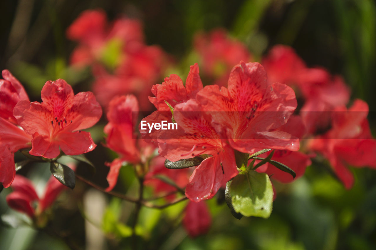 flower, red, growth, nature, beauty in nature, spring, no people, summer, plant, fragility, outdoors, close-up, day
