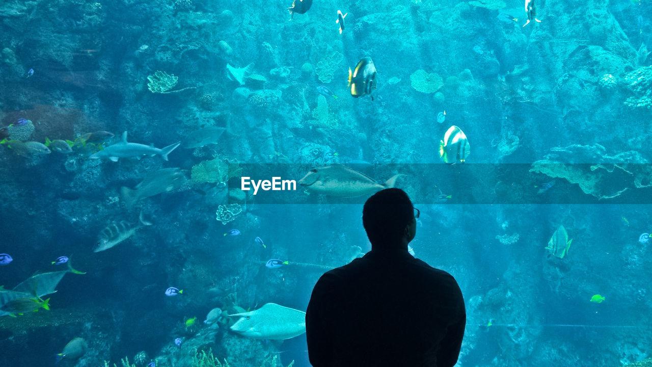 Rear View Of Man Looking At Aquarium