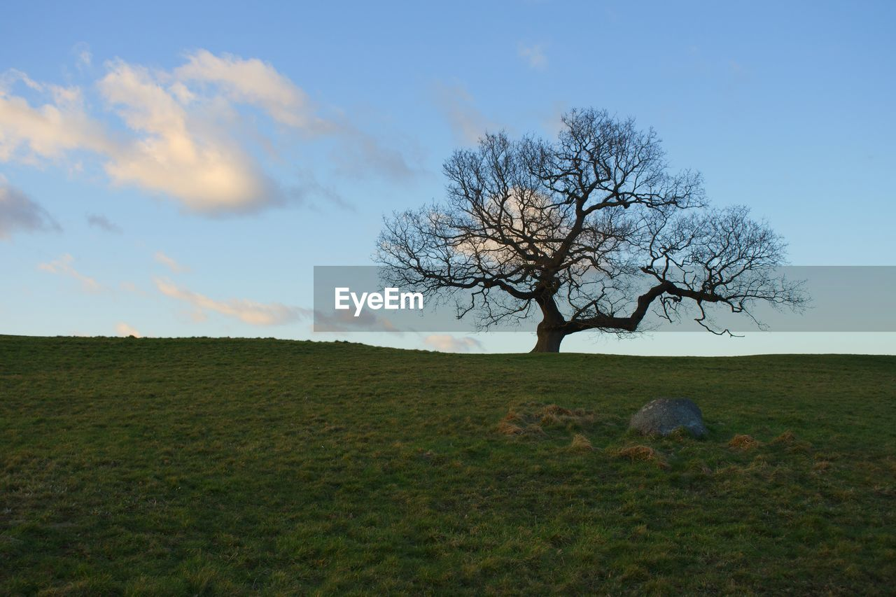bare tree, landscape, grass, field, tree, sky, horizon over land, nature, tranquility, beauty in nature, day, outdoors, lone, branch, scenics, one person, animal themes, mammal, people