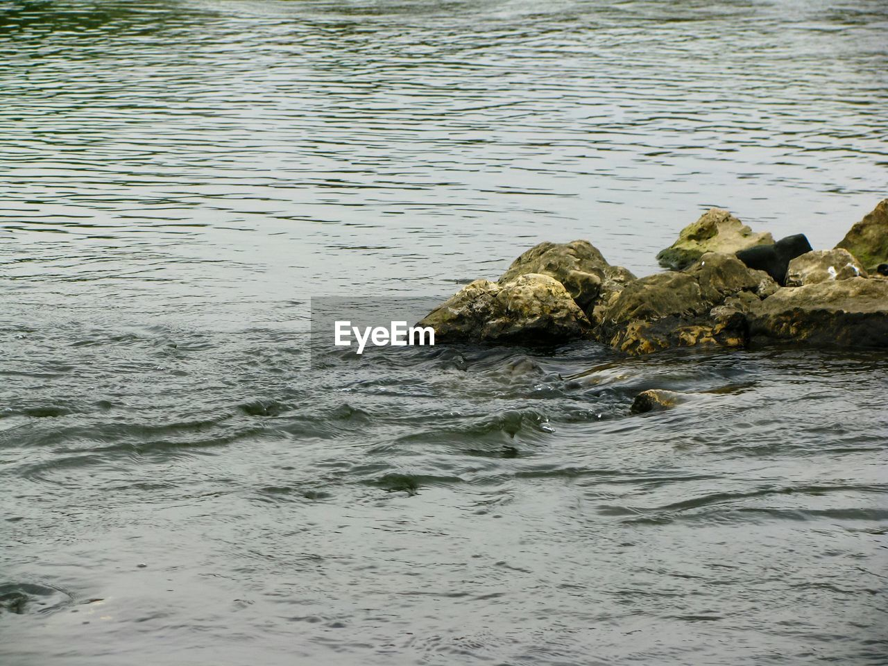 water, waterfront, sea, reptile, animals in the wild, animal wildlife, animal, no people, animal themes, nature, vertebrate, day, rock, rock - object, crocodile, outdoors, solid, rippled