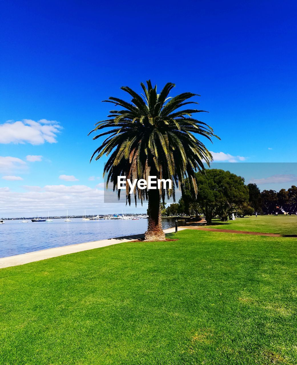 grass, nature, green color, scenics, tree, palm tree, beauty in nature, tranquil scene, sea, day, field, outdoors, tranquility, growth, sky, no people, water, landscape, clear sky