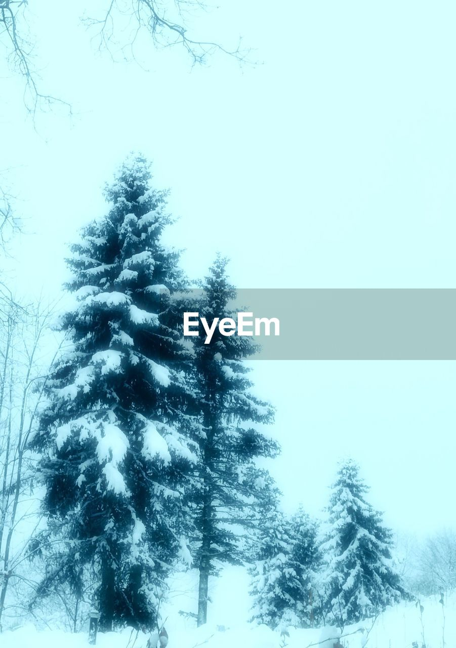 tree, plant, winter, sky, cold temperature, snow, beauty in nature, nature, tranquility, no people, low angle view, day, growth, scenics - nature, clear sky, tranquil scene, frozen, coniferous tree, pine tree, outdoors, fir tree