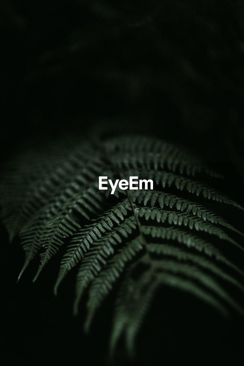 Detail shot of fern