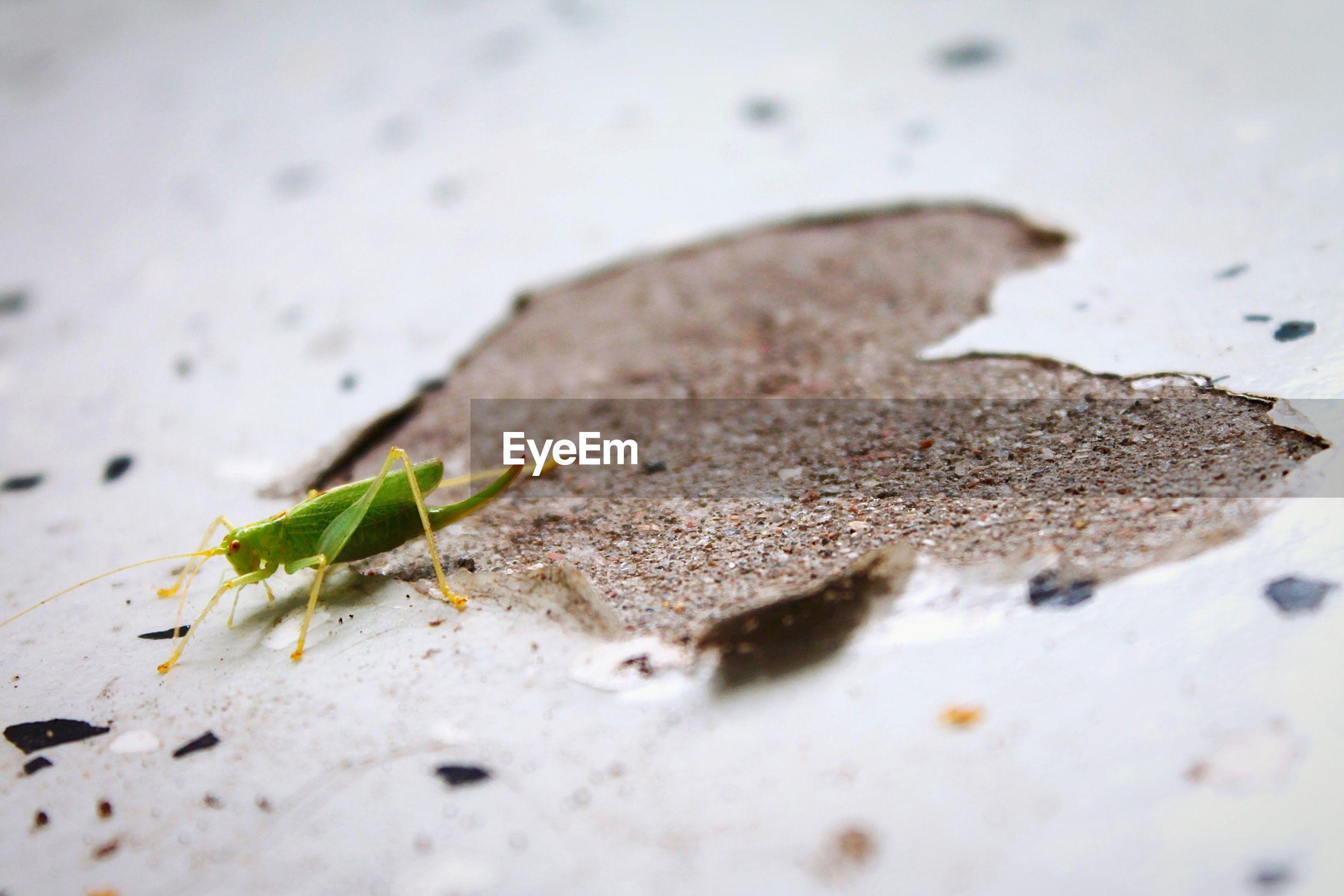 Grasshopper on floor