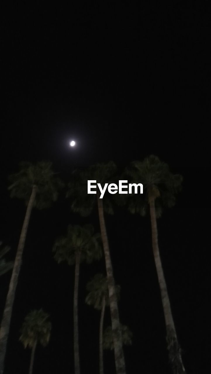 night, moon, sky, plant, no people, nature, low angle view, tree, full moon, moonlight, growth, illuminated, beauty in nature, outdoors, dark, copy space, close-up, palm tree, astronomy, tranquility